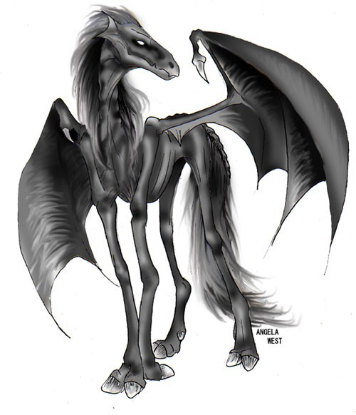 thestral1aw (500x582, 53Kb)