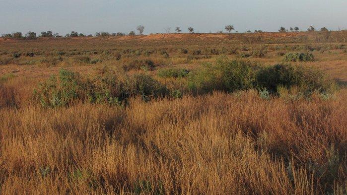Национальный Парк Манго - Mungo National Park 47897