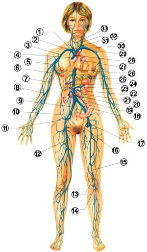 диагностика по пульсу (300x514, 171Kb)