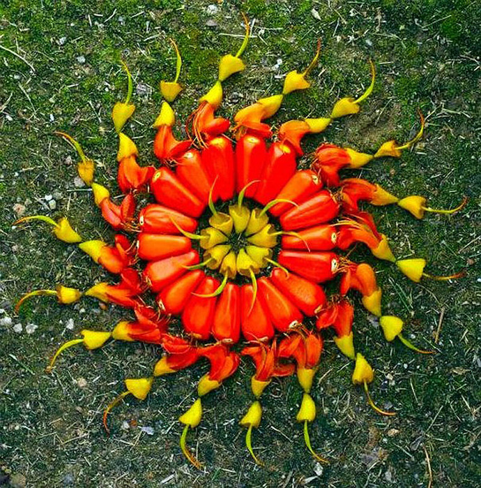 цветочные мандалы фото 4 (690x700, 300Kb)