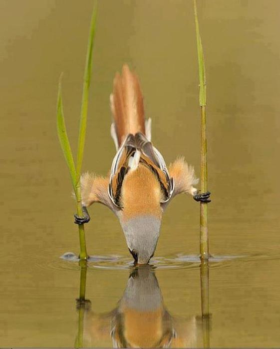 жажда скачать торрент - фото 10