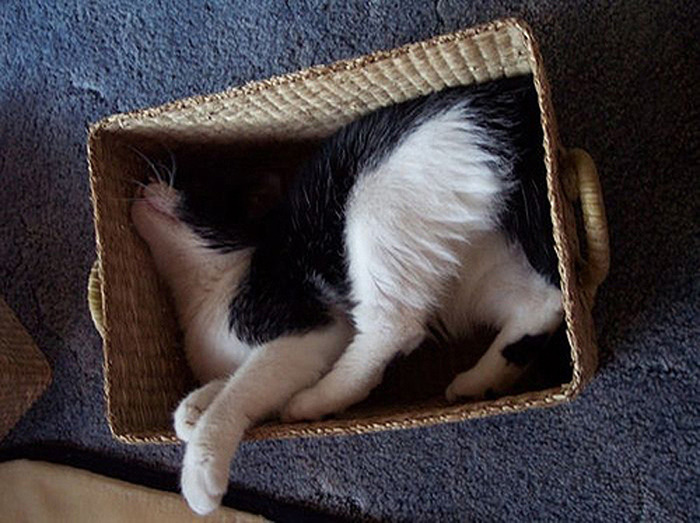 коты спят (3) (700x523, 124Kb)