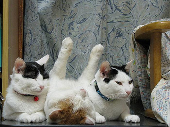 коты спят (11) (700x525, 138Kb)