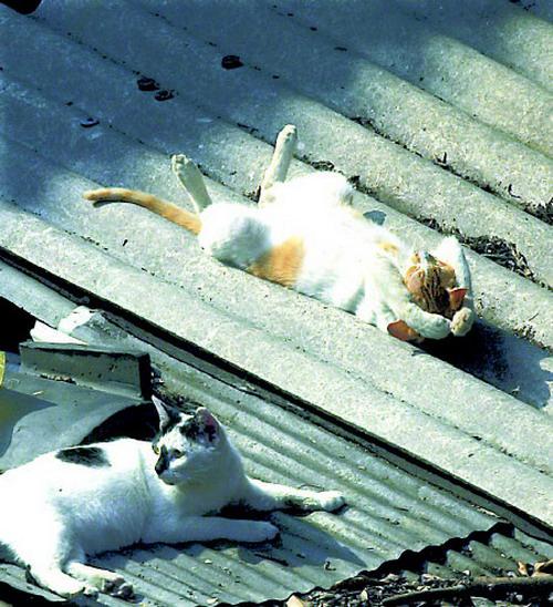 коты спят (19) (500x548, 197Kb)