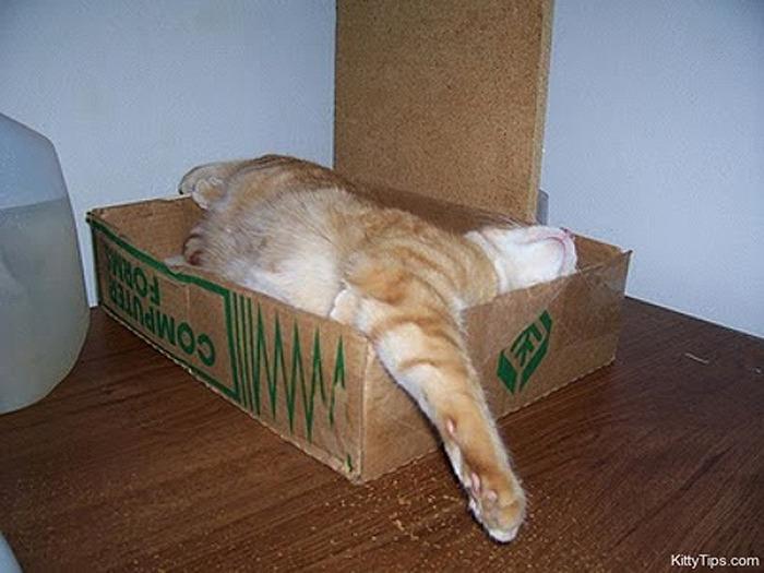 коты спят (21) (700x525, 100Kb)