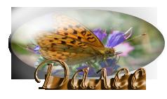 пеперуда8 (238x141, 52Kb)