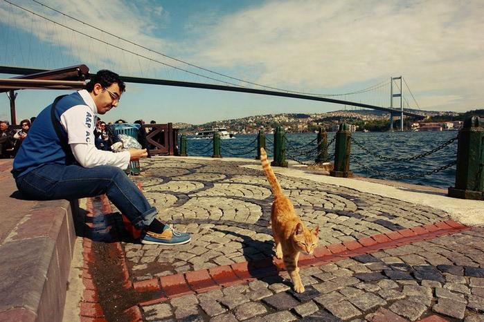 Cтамбул на фото Петра Ловыгина 27 (700x466, 126Kb)