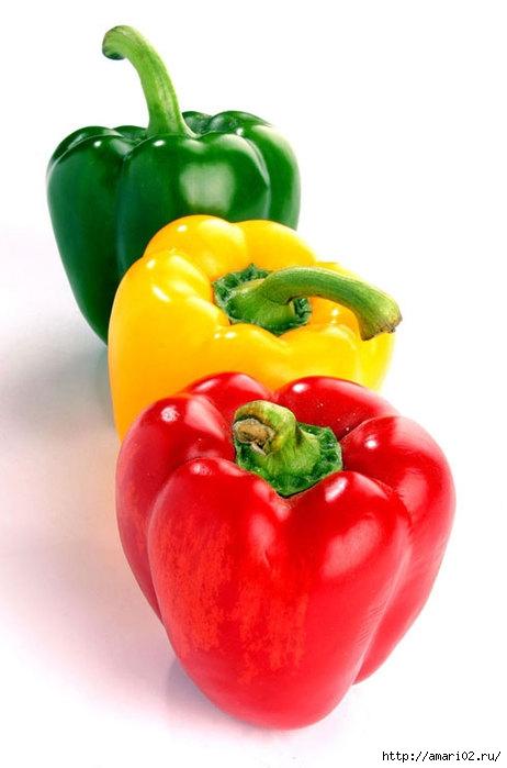 pepper1 (462x700, 115Kb)