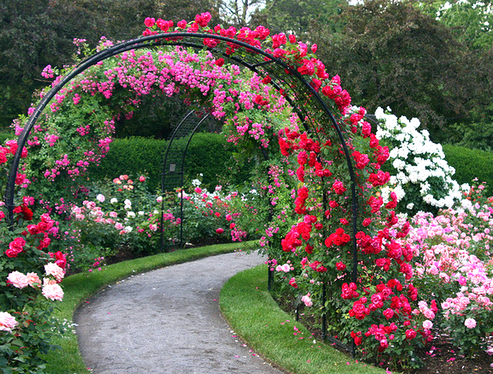 73727781_rose_garden_path__Flickr__Photo_Sharing (700x531, 1005Kb)