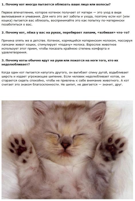 cats_01 (471x700, 208Kb)