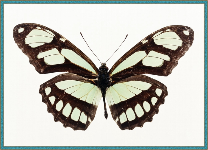 1_Butterfly_122 (700x504, 229Kb)