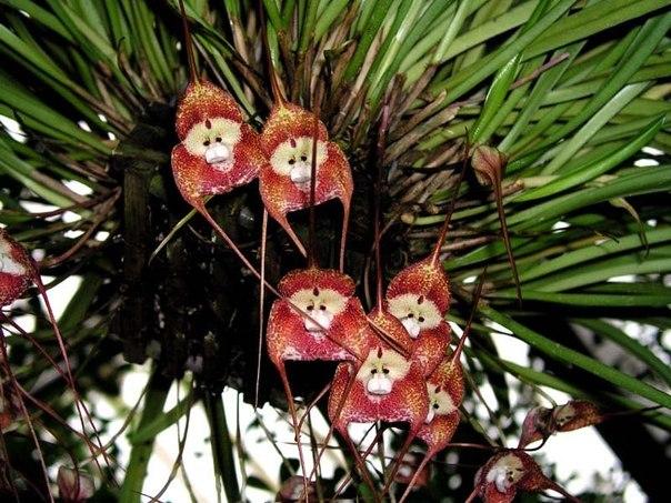 необычные орхидеи фото (604x453, 90Kb)
