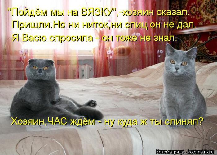 kotomatritsa_QX (700x499, 68Kb)