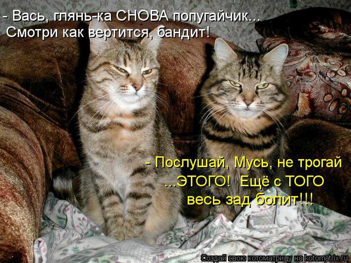 kotomatritsa_RJ (700x524, 92Kb)