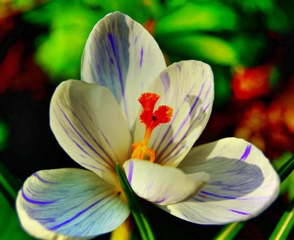 цветы (600x491, 67Kb)