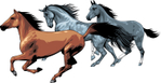 Превью running_horses_03 (700x361, 175Kb)