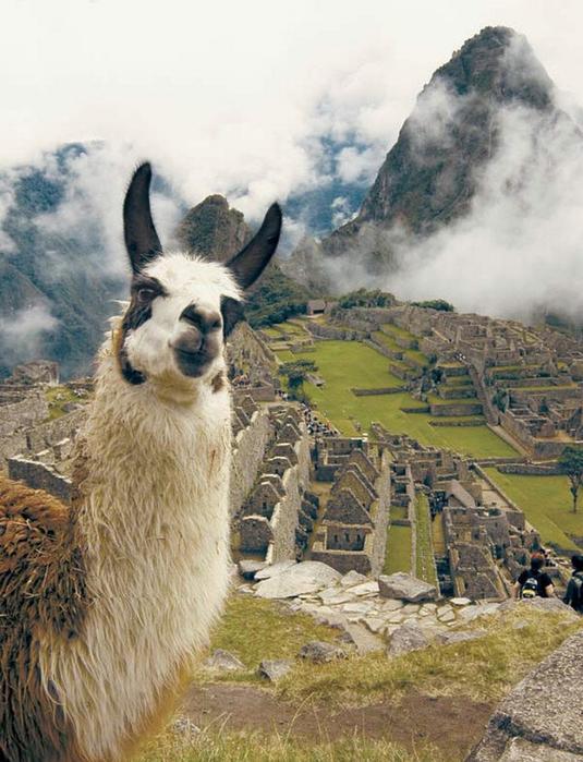 Как разнообразить путешествие по Латинской Америке 14 (535x700, 403Kb)