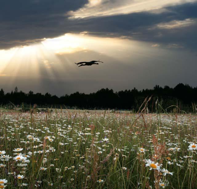 Сегодня прекрасное солнечное утро   1 июля на календаре