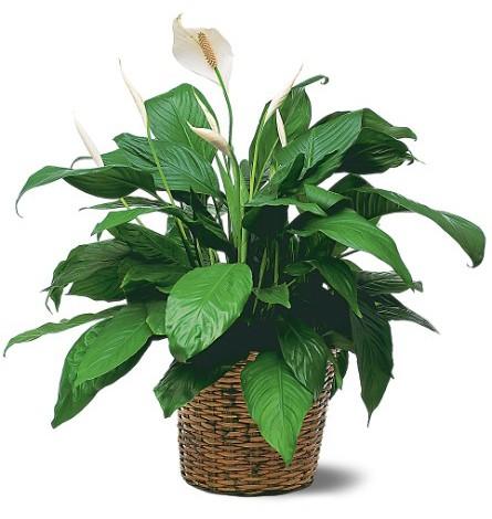 Магические свойства растений самое