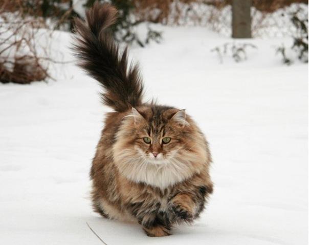 3/-0. Автор. кошка спустившаяся с небес.