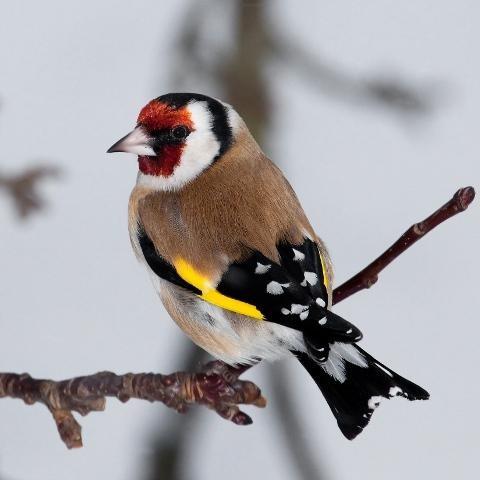 ...примут участие сотни тысяч любителей птиц более чем из 100 стран мира.