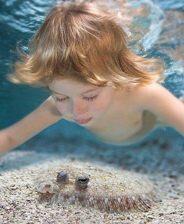 ИПОСТАСЬ ФОТОГРАФ или Подводный мир Зены Холловей (Zena Holloway)