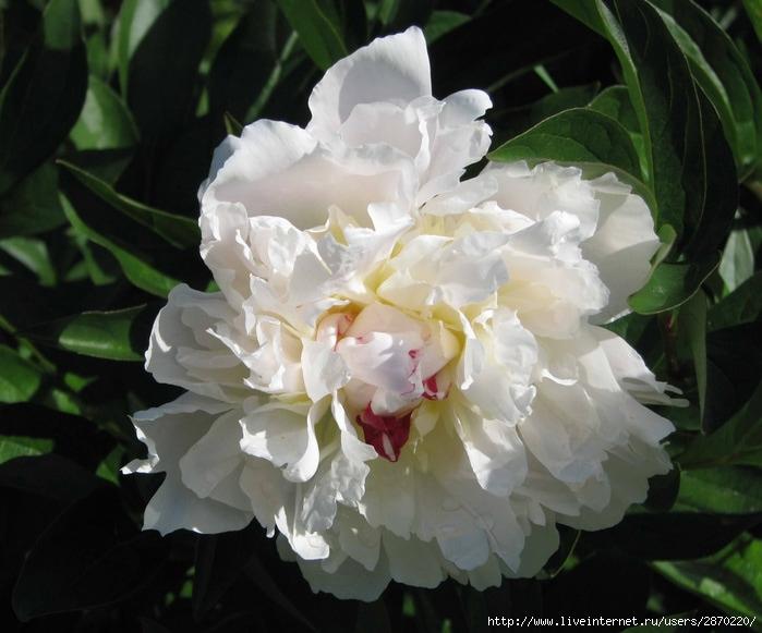 Ботанический 1 июля 033 (700x581, 196Kb)