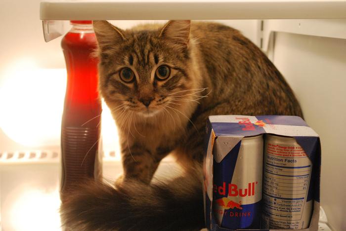 прикольные фото кошек 16 (700x468, 149Kb)