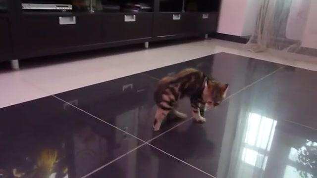 кошачий балет видео/3518263_28023441 (640x360, 23Kb)