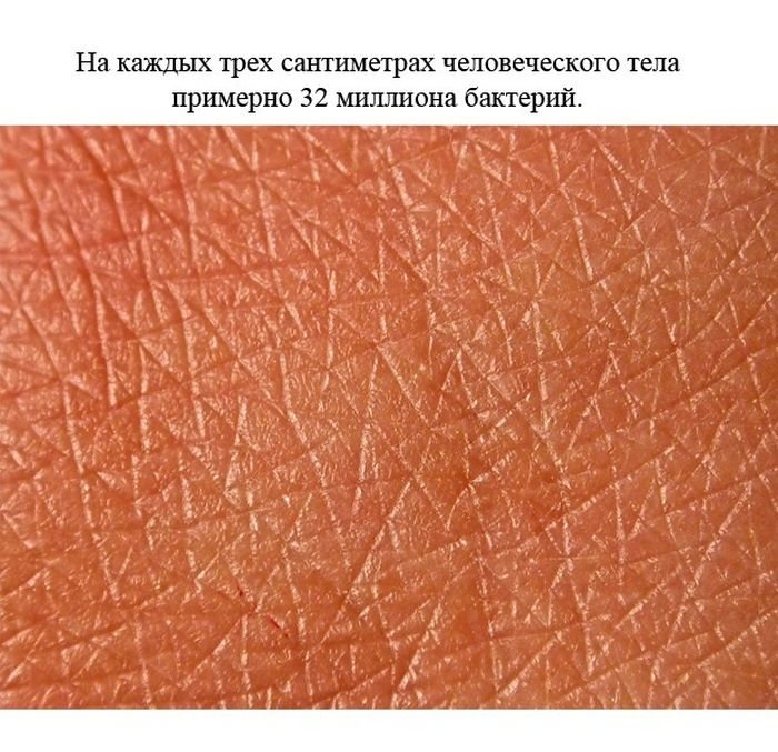fakty_o_cheloveke_24_foto_5 (700x677, 104Kb)