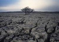 Почвоведы называют эрозию настоящей трагедией и уже готовятся к мировой катастрофе.  Виноваты фермеры, которые.