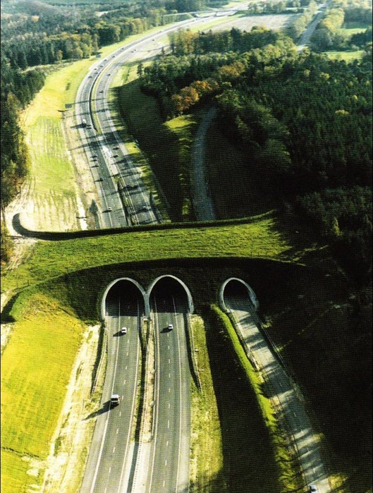 мосты для животных фото, зеленые мосты фото, мосты для животных смотреть фотографии