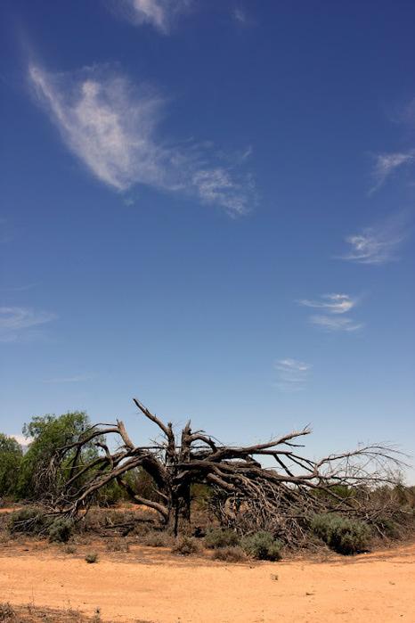 Национальный Парк Манго - Mungo National Park 63777