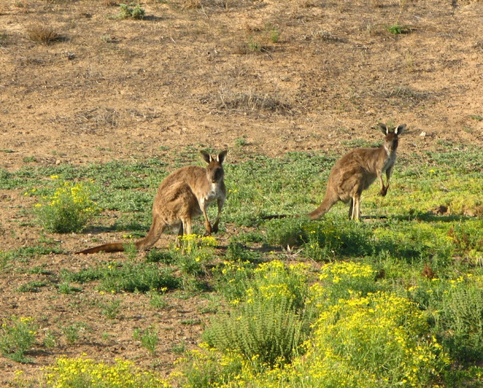 Национальный Парк Манго - Mungo National Park 10112
