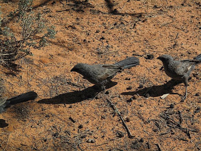 Национальный Парк Манго - Mungo National Park 13691