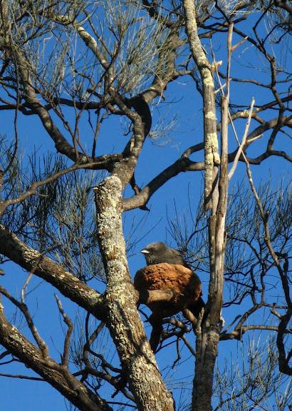 Национальный Парк Манго - Mungo National Park 89808