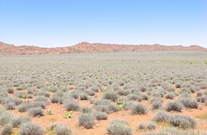 Namaqualand-flowers-5 (700x457, 97Kb)