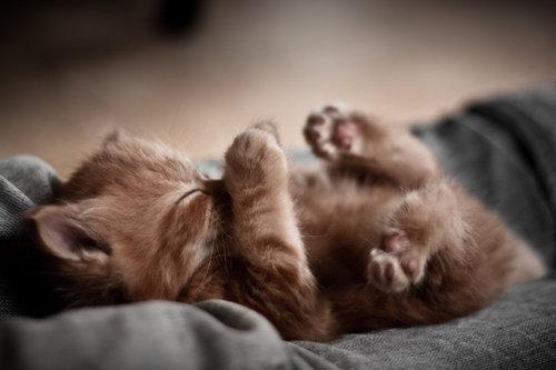 Картинки по запросу смешные котёнки