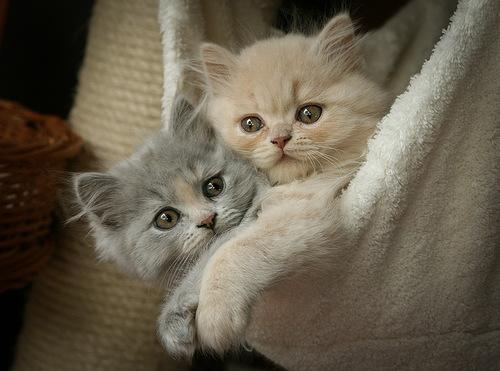 смешные котята фото 4 (500x371, 70Kb)