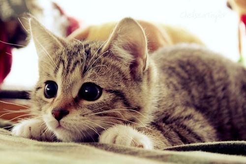 смешные котята фото 6 (500x333, 59Kb)