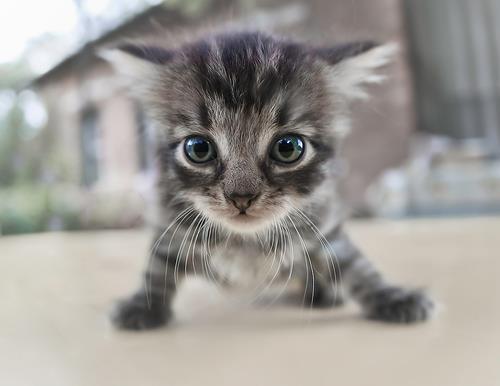 смешные котята фото 9 (500x386, 20Kb)