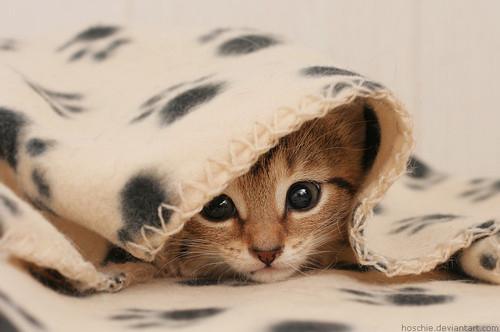 смешные котята фото 11 (500x332, 72Kb)