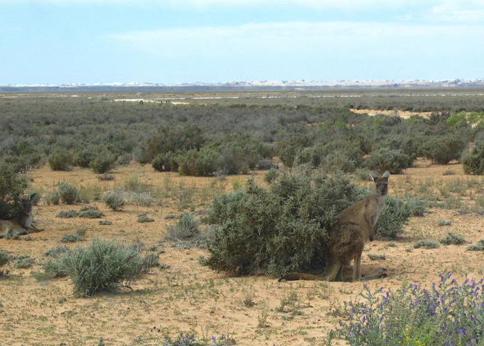 Национальный Парк Манго - Mungo National Park 52898