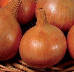 1291821248_onion_3 (250x243, 14Kb)