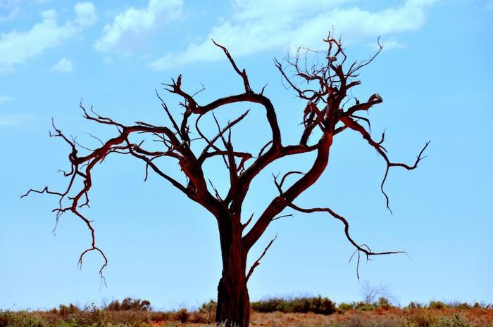 Национальный Парк Манго - Mungo National Park 97568