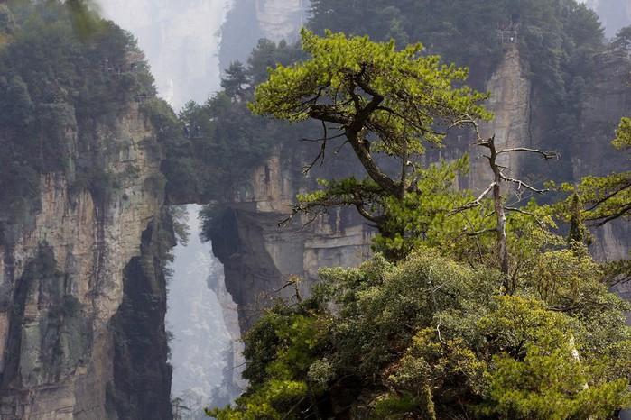 лес из камней4 (700x466, 123Kb)
