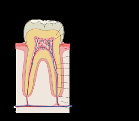 зубы (450x392, 103Kb)