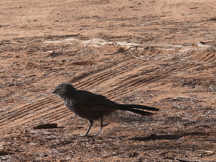 Национальный Парк Манго - Mungo National Park 26598