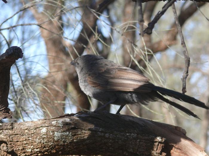 Национальный Парк Манго - Mungo National Park 31296