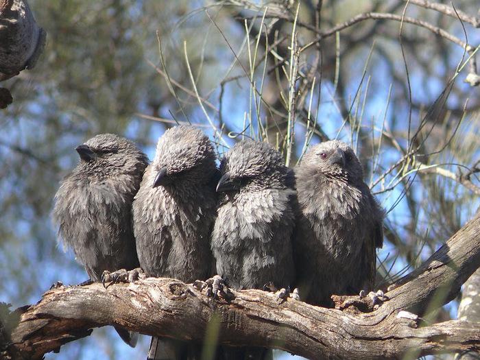 Национальный Парк Манго - Mungo National Park 74108